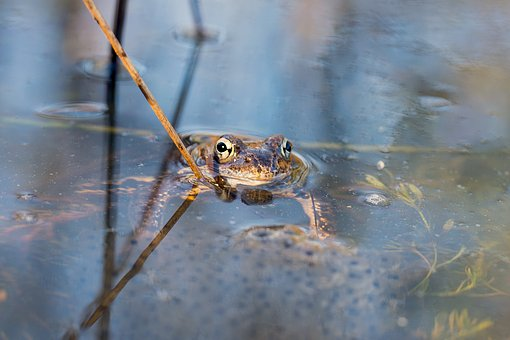 frog-2291912__340grenouille