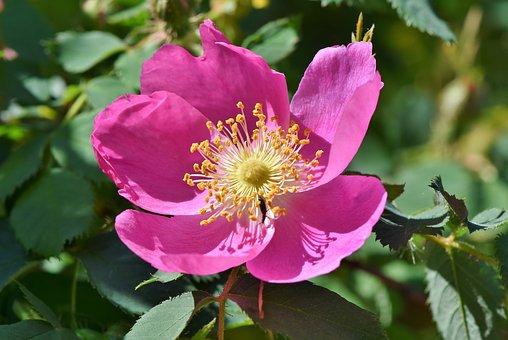 anemone-3386369__340