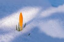 ob_ce6115_spring-awakening-3132112-1280mars